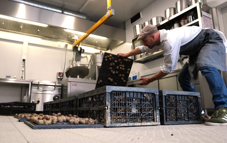 Schnecken in Trockenruhe in der Produktion, Verarbeitung der Escargots, Farm 2 Table, trotz Nachhaltigkeit werden alle Hygienerichtlinien und die Qualität in der Produktion erfüllt