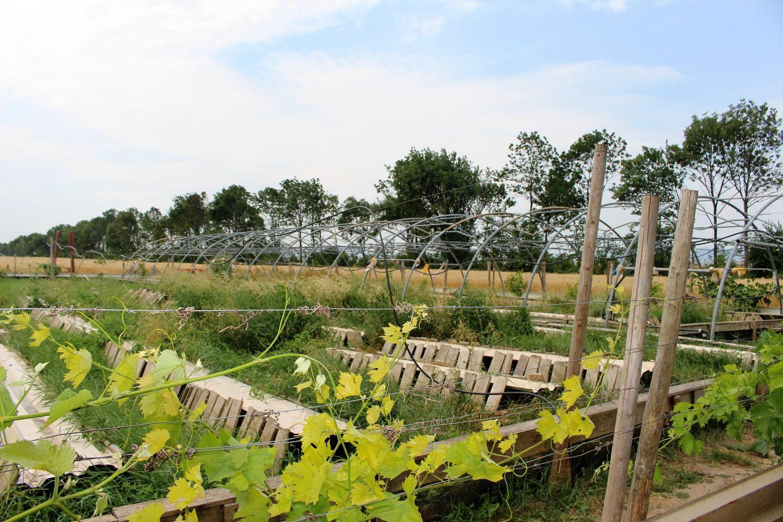 Schnecken-Feld am Gugumuck-Hof, Farm 2 Table. Die naturnahe Aufzucht unserer 200.000 Weinbergschnecken erfolgt, ohne Einsatz von Chemie. Die Tiere leben auf unserem Gemüseacker in Freilandhaltung.