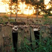 Vorreiterrolle der Futurefarm Schneckenfeld Guguuck-Hof, Konzepte für urbane Landwirtschaft können die Umwelt entlasten