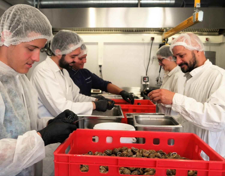 Verarbeitung der Escargots zu Schnecken-Haus, Muskelfleisch und Schnecken-Leber, alles in Handarbeit von der Ernte bis zum Blanchieren