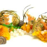 Zinter Aquarium_mittel, Schnecken-Leber und Escargots-Kaviar Menü. Schneckenperlen oder Schneckenkaviar ist ein Geheimtipp unter Haubenköchen geworden. OB ALS AMUSE-GUEULE ODER TOPPING FÜR IHR GANZ BESONDERES GERICHT!
