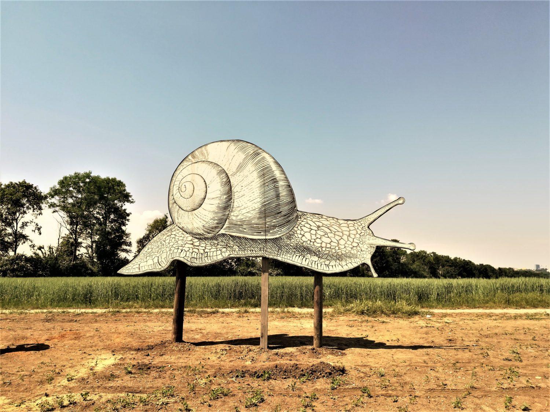 Riesenschnecke, Escargot, auf der Schneckenfarm Gugumuck