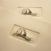 Stich Schnecke, Kupferstich einer Escargot aus dem Hause Wiener Schneckenmanufaktur Gugumuck