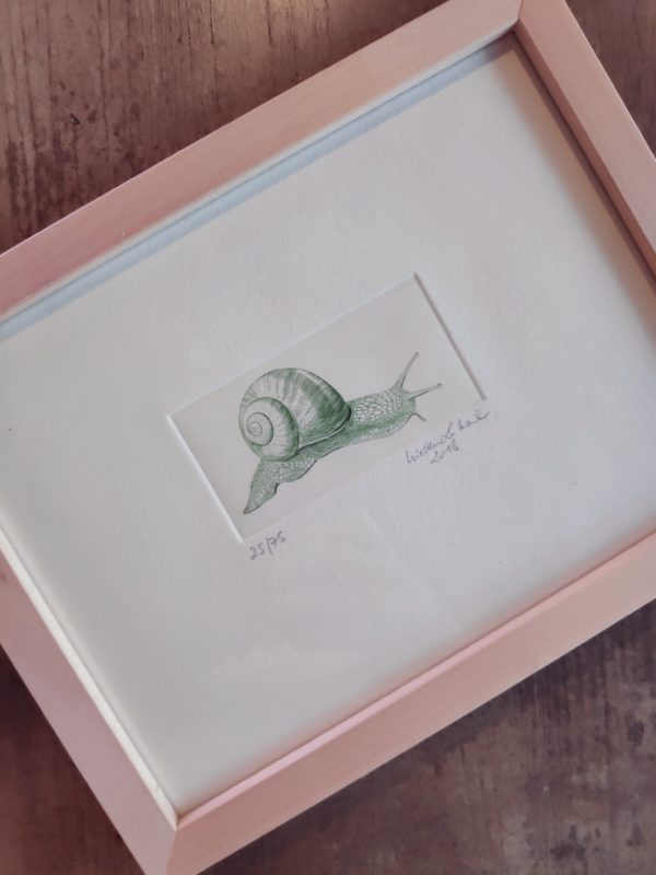 Limitierten Auflage unserer Künstlerin Kirsten Lubach exklusiver Kupferstich von einer Weinbergschnecke. Mit und ohne Holz-Rahmen in grün.